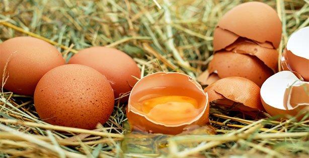 Makanan Baik Untuk Orang yang Patah Tulang, Telur