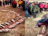 Kejadian aneh, Kerangka Naga Ditemukan Oleh Warga Desa