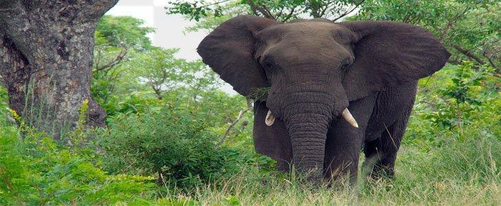 Taman Nasional Kruger, Wisata Taman Nasional Kruger, Wisata Afrika Taman Nasional Kruger, South Africa, Kruger Park