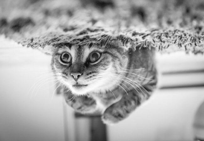 Mengapa Kucing Harus Dimandikan