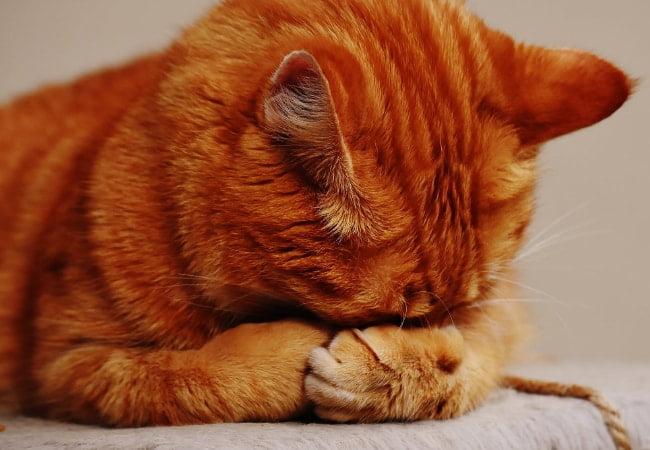 Pilih Kandungan Yang Tepat Untuk Kucing