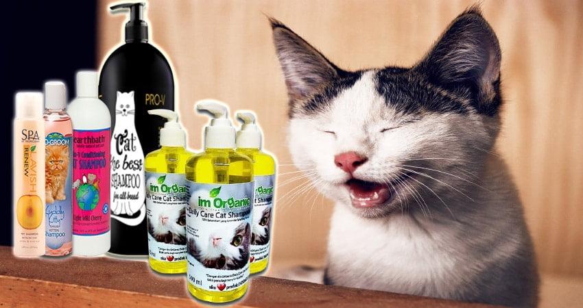 Harga Shampo Kucing